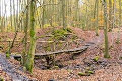 Vecchio ponte di legno nella ricreazione principale di ostacolo di modo del percorso della foresta fotografia stock