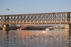 Vecchio ponte ferroviario a Belgrado fotografia stock