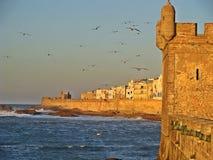 Vecchio porto di Essaouira nel Marocco fotografia stock libera da diritti