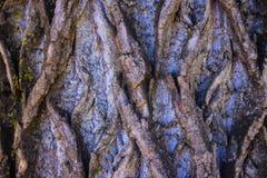 Vecchio primo piano del tronco di albero fotografia stock