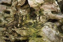 Vecchio primo piano di legno di struttura del sufrace del muschio del tronco di albero Immagine Stock Libera da Diritti