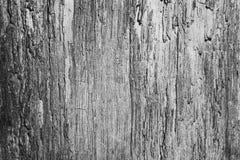 Vecchio primo piano incrinato dell'albero Immagini Stock Libere da Diritti