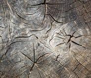 Vecchio profilo del tronco Immagini Stock