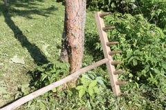 Vecchio rastrello di legno ad un albero in un giardino Fotografia Stock
