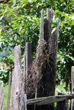 Vecchio recinto di legno con il fondo verde dell'albero Fotografia Stock