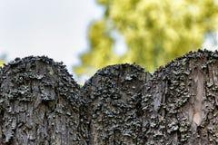 Vecchio recinto di legno invaso con muschio nel fondo di prato inglese verde fotografia stock