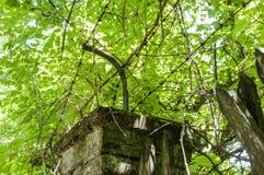 Vecchio recinto tagliato piacevole Immagini Stock