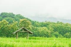 Vecchio riparo nel giacimento verde del riso Immagini Stock Libere da Diritti