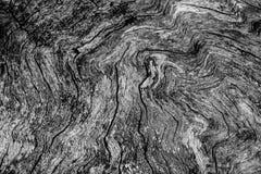 Vecchio ritaglio dell'albero che mostra struttura della venatura del legno Immagine Stock