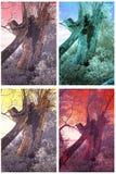 Vecchio salice-albero Immagini Stock