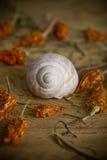 Vecchio seashell Immagini Stock Libere da Diritti