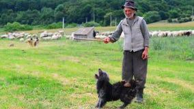 Vecchio Sheperd vicino alla sua moltitudine Fotografia Stock Libera da Diritti