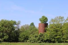 Vecchio silo con un albero che cresce dalla cima fotografia stock