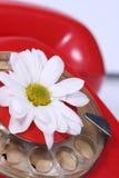 Vecchio telefono e fiore bianco Fotografia Stock Libera da Diritti