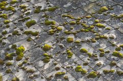 Vecchio tetto coperto di muschio immagine stock