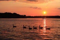 Vecchio tramonto del hickory Fotografia Stock