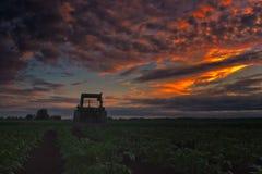 Vecchio trattore su un giacimento della patata Immagini Stock Libere da Diritti