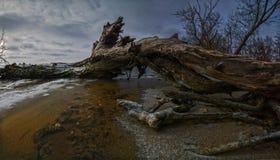 Vecchio tronco di albero su un essicatoio per orzo del  di inverno Ñ Fotografia Stock