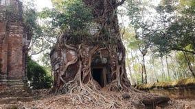 Vecchio tronco e tempio antico a Kor Ker Fotografie Stock Libere da Diritti