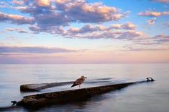 Vecchio uccello Immagini Stock