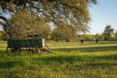 Vecchio vagone in un campo con le mucche Immagine Stock