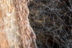 Vecchio Web di ragno Fotografia Stock