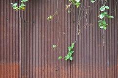 Vecchio zinco arrugginito Fotografia Stock