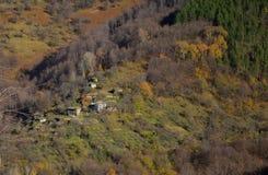 Vecindad en el bosque Imagen de archivo