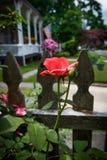 Vecindad Rose Fotos de archivo
