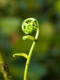 veckla ut för fernspets Arkivfoto