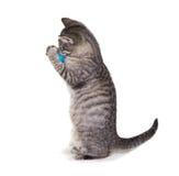 12 veckor är den gamla kattungen plyin med en boll Arkivbilder