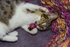 12 veckor gammal kattunge i en korg Arkivfoton