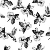 Vecotr hand drawn seamless pattern. tropical plants. Exotic engraved leaves and flowers. Isoalated on white. hibiscus. Hummingbird. Use for exotic beach Stock Photos