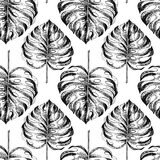 Vecotr hand drawn seamless pattern. tropical plants. Exotic engraved leaves and flowers. Isoalated on white. Monstera. Deliciosa palm leaves. Use for exotic Stock Images