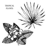 Vecotr hand drawn tropical plant icons. Exotic engraved leaves and flowers. Isoalated on white. livistona palm leaf Stock Images