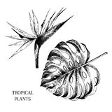 Vecotr hand drawn tropical plant icons. Exotic engraved leaves and flowers. Isoalated on white. Monstera leaf, bird of Stock Photography