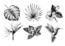 Vecotr hand drawn tropical plant icons. Exotic engraved leaves and flowers. Monstera, livistona palm leaves, bird of. Paradise, plumeria, hibiscus, hummingbird Royalty Free Stock Photo