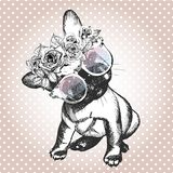 Vecotr portrait of dog, wearing the floral wreath and sunglasses. French bulldog breed. Stock Photo