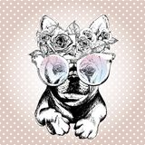 Vecotr portrait of dog, wearing the floral wreath and sunglasses. French bulldog breed. Royalty Free Stock Image