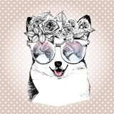 Vecotr portrait of dog, wearing the floral wreath and sunglasses. Wesh corgi pembroke breed. Stock Photo