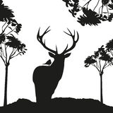 Vecrot black deer in the woods stencil Stock Images