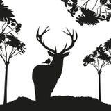 Vecrot svarthjortar i trästencilen Arkivbilder