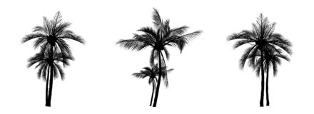 Vecter des palmiers, arbre de noix de coco illustration libre de droits