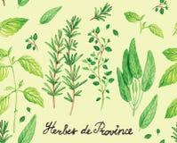 Vecteur épicé de modèle d'herbes de la Provence d'aquarelle Images libres de droits