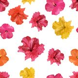 vecteur abstrait d'illustration de ketmie de fleur Isolant coloré de modèle sans couture tropical de fleurs Photographie stock