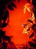 Vecteur abstrait floral Photos libres de droits