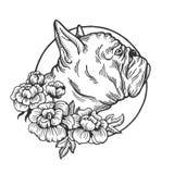 Vecteur animal de gravure de bouledogue Photographie stock