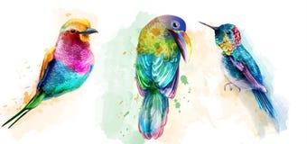 Vecteur coloré d'aquarelle d'oiseaux tropicaux Beaux perroquets, collections réglées exotiques d'oiseau de ronflement illustration libre de droits