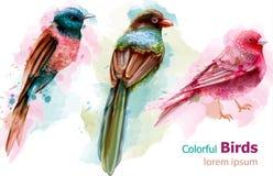 Vecteur coloré d'aquarelle d'oiseaux tropicaux Belles collections réglées exotiques illustration stock