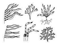 Vecteur comestible de croquis d'algues mauvaises herbes sous-marines marines d'usines illustration stock